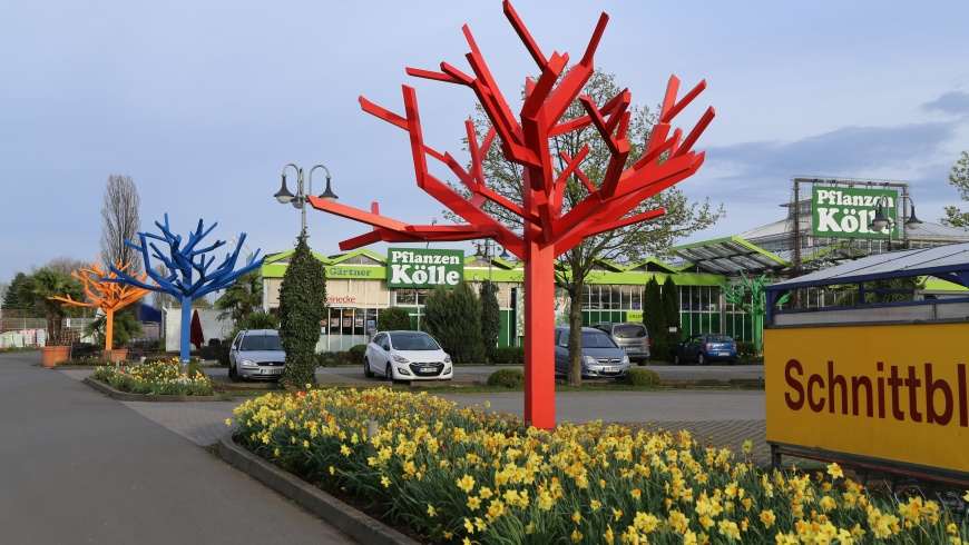 Pflanzen - Kölle in Teltow