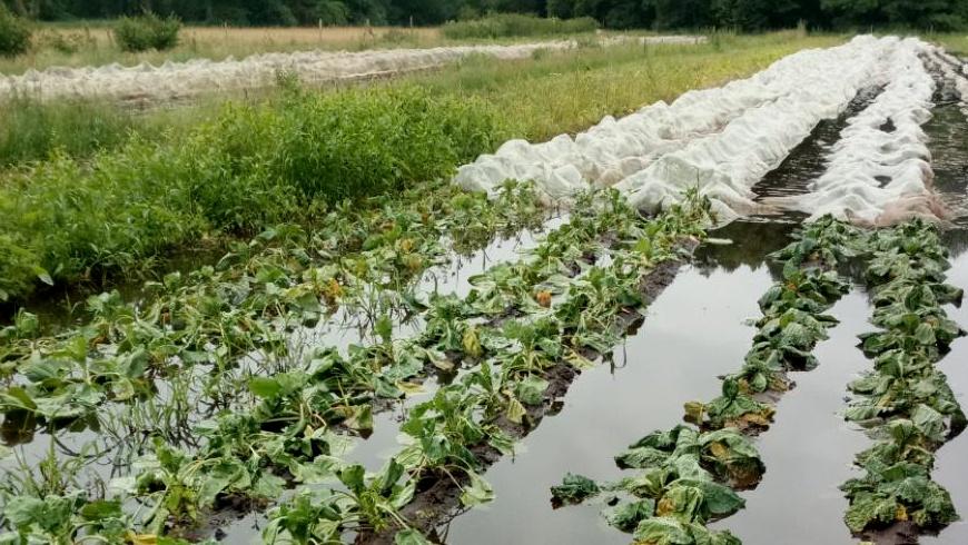 Dauerregen & Staunässe im Gemüsebau