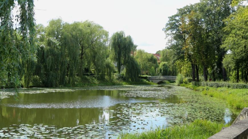 Lindenhofteich