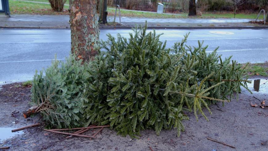 Weihnachtsbaum-Entsorgung