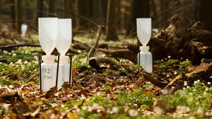 """TERENO-PROJEKT, Untersuchungsstandort """"Hohes Holz"""", Installation und Ausbringung von Regensammlern in einem Waldstück"""