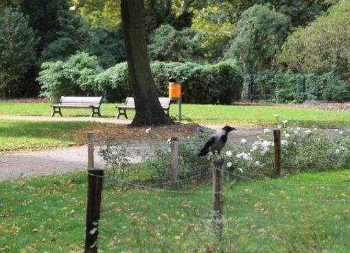 Krähe im Rudolph-Wilde-Park