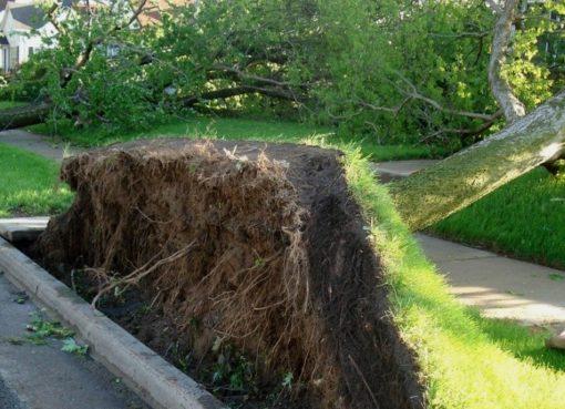 Klimawandel: Risiko umfallende Bäume