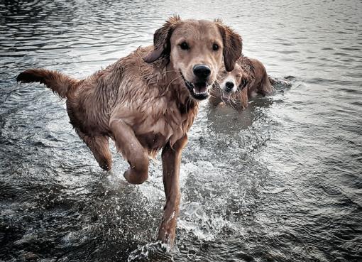 Nasse Hunde